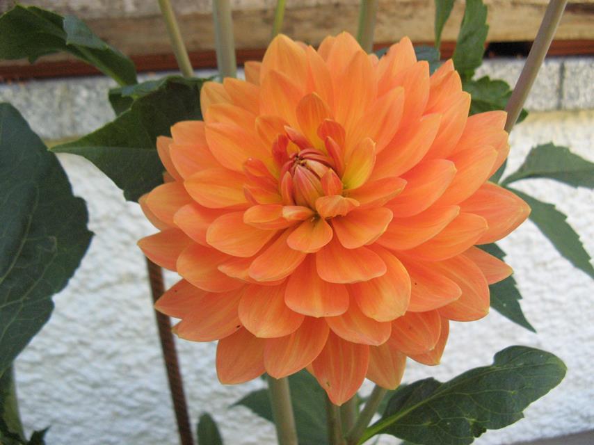 9#1425 Orange Garden (Copy).JPG