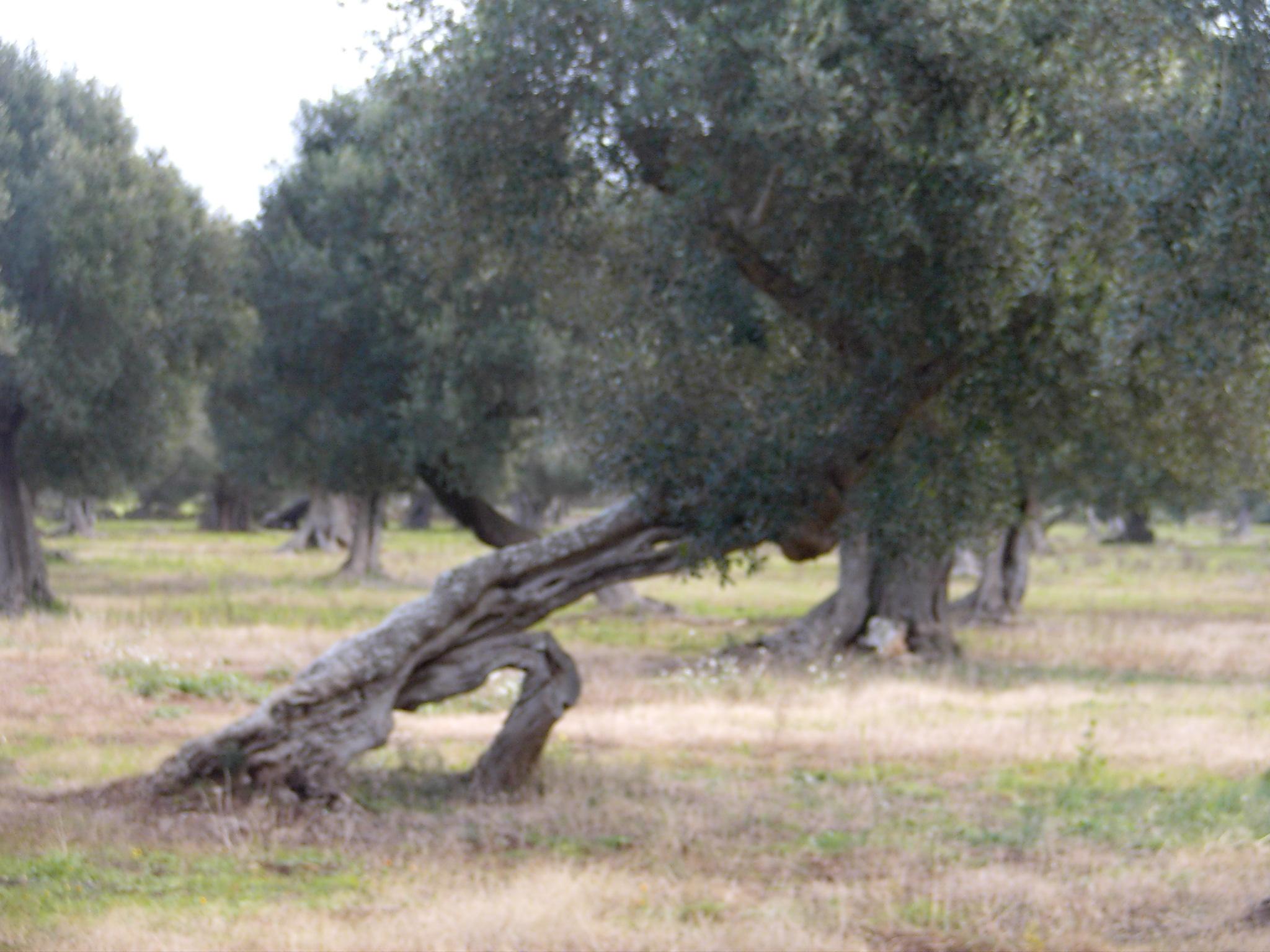 Apulien 14 15 Letzte Tage, Rückfahrt, San Marino 007.JPG