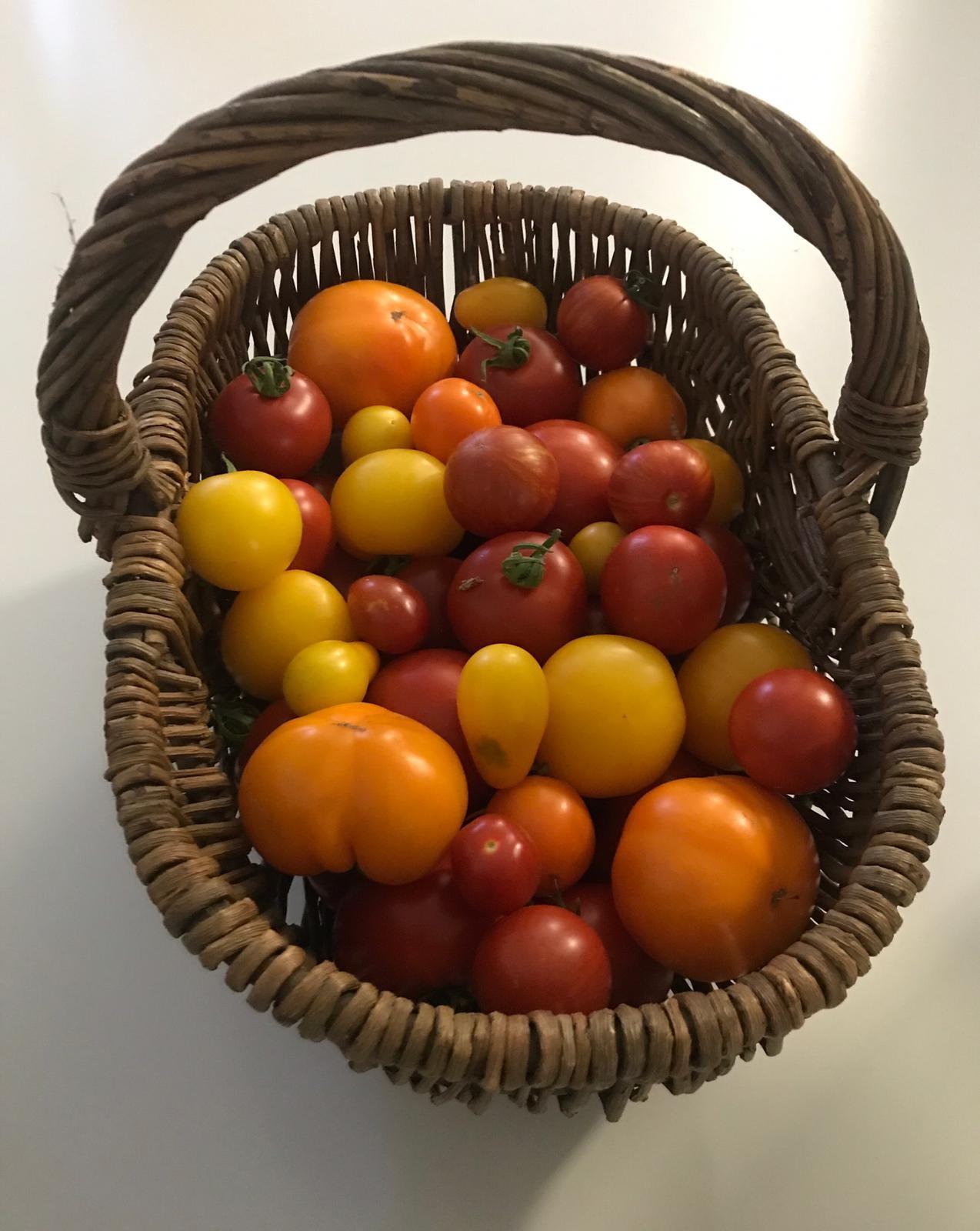 Tomatenkorb.jpg