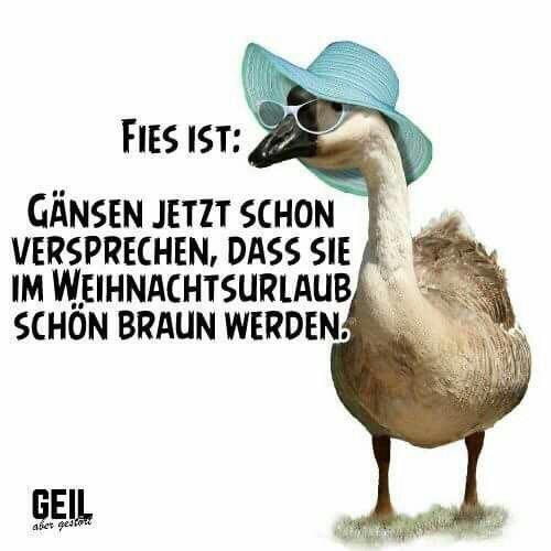 Witz_Enten & Gänse.jpg