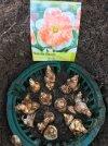 Pflanzkorb für Zwiebeln.jpg
